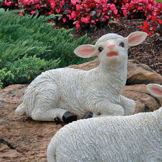 Yorkshire sitting lamb