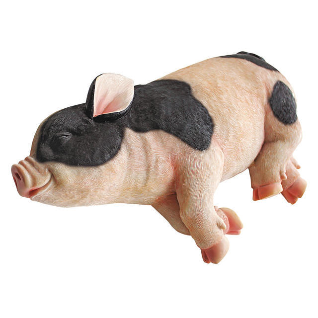 Black & white sleeping pig
